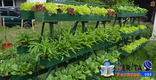 Mari Bercocok Tanam Dirumah, Yuk Lihat 4 Jenis Sayur Yang Tahan di Cuaca Panas