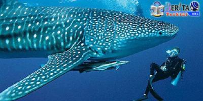 Nikmati Eksplorasi Spot Terbaik Menyelam di Maldives