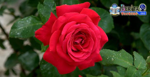 Ternyata 5 Jenis Tanaman Bunga Ini Baik Untuk Halau Stres, Mau Tau Apa Saja?
