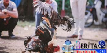 Gerebek Tempat Judi, Polisi Tewas Diserang Ayam
