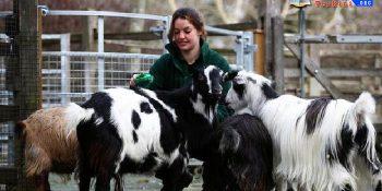 Pertama di Dunia, Rusia Daftarkan Vaksin Covid-19 untuk Hewan